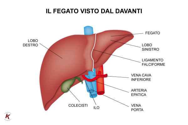 esami del fegato